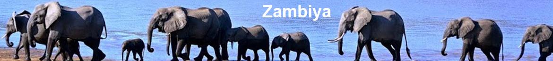 Zambiya çiçek yollayın  // çiçekçi Zambiya  //  çiçek siparişi verin Zambiya FLORA ÇİÇEK TÜRKİYE