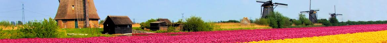 Hollanda çiçekçi gönder / Hollanda çiçek siparişi / Hollanda çiçekçi / Hollanda çiçekçiler / Yurtdışı çiçek siparişi