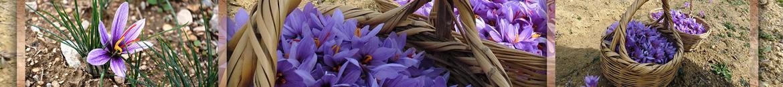 Karabük eskipazar ilçesi çiçekçi, eskipazar çiçek gönder, eskipazar çiçek siparişi, eskipazar hediye gönder